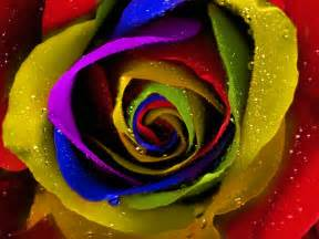 Small Desktop Computers 2014 Rainbow Roses Wallpaper High Definition High Quality