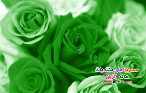 beautiful green color صور ورد اخضر 2013 صور ورد باللون الاخضر 2013 اجمل ورد