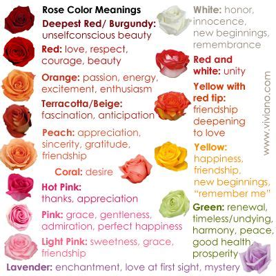 burgundy color meaning best 25 color meanings ideas on
