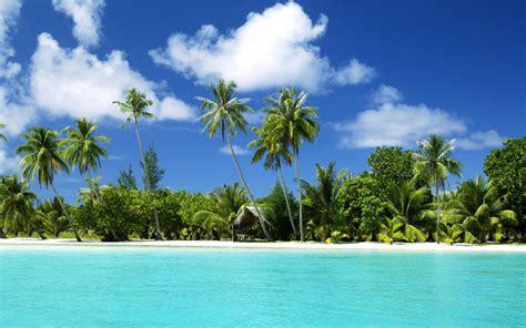 palm tree desk l sea desktop island tropical tree trees w 1920x1200
