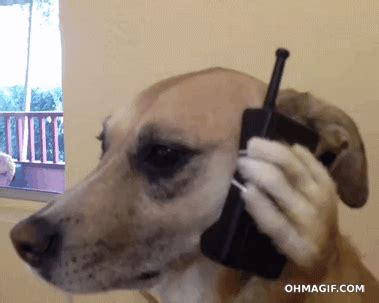 Dog Phone Meme - phone talking gif find share on giphy