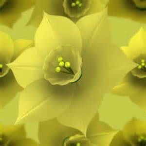 The Flower Daffodil - daffodil bulbs organic compost
