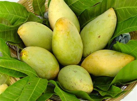 Fruit Mango mango world crops database
