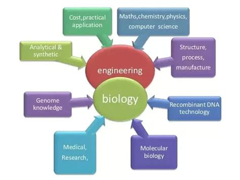 biomedical engineering description what are some opportunities in biomedical engineering