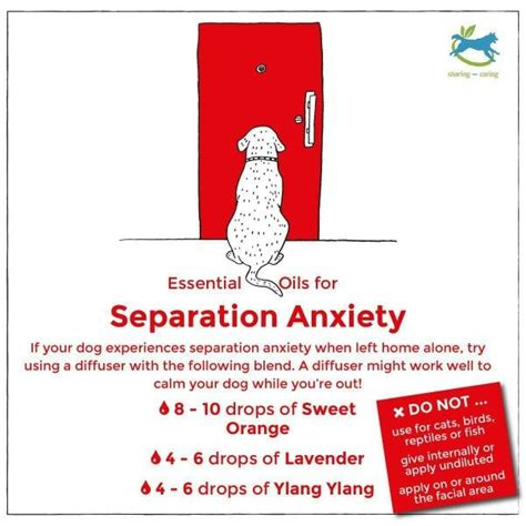 essential oils for itchy dogs essential oils for separation anxiety in dogs essential oils