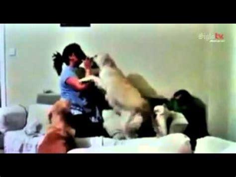 se la folla su mascota perros defienden a ni 241 o de los golpes de su madre youtube