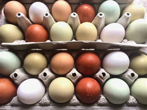 egg colors chicken egg colors which breeds lay which colored eggs