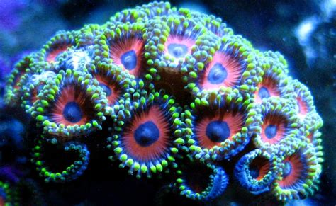 Types Of Aquarium by Seatech A Budding Relationship For Coral Beauty