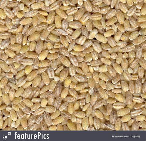 Cooking Barley Measurements Plants Pearl Barley Stock Photo I3064516 At Featurepics