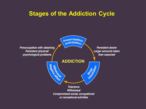 Stages Of Detox by Addiction Reward Motivation And Stress Ppt