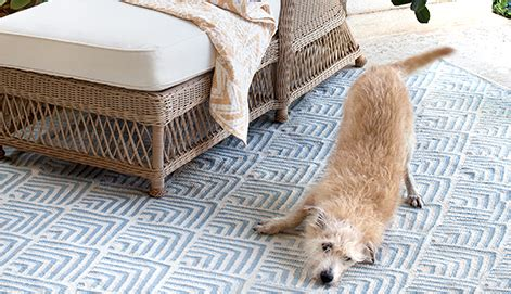 how to the pet friendly rug