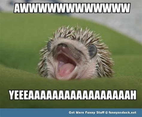 Memes Happy - excited animal memes image memes at relatably com