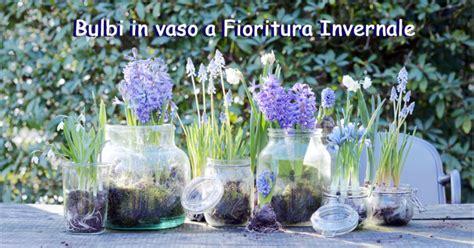 bulbi in vaso bulbi in vaso pianta da giardino di febbraio