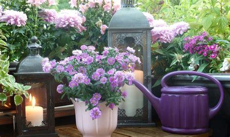 fiori profumati piante dai fiori profumati casafacile