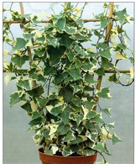 climbing plant support systems how to grow climbing plants
