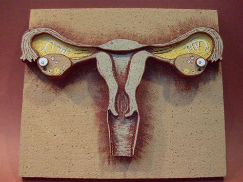 como hacer una maqueta del aparato reproductor femenino maqueta del aparato reproductor masculino buscar con