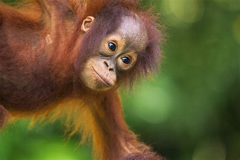images of borneo travel lonely planet