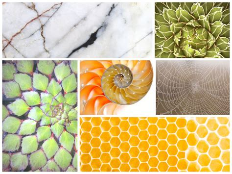 geometric pattern found in nature trends geometric prints patterns printhouse corporation