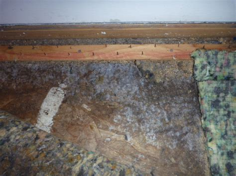 Mould In Carpet Health Risks by Hidden Risks Penicillium Mold In The Indoor Environment