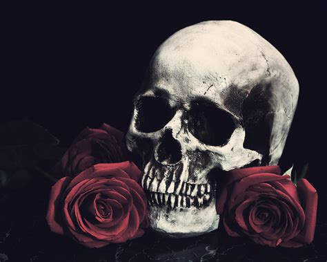 skull and black rose tattoo skull and roses gt post gt gt april koehler photography
