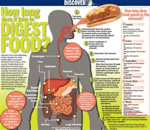 how does it take to digest food meats can take up