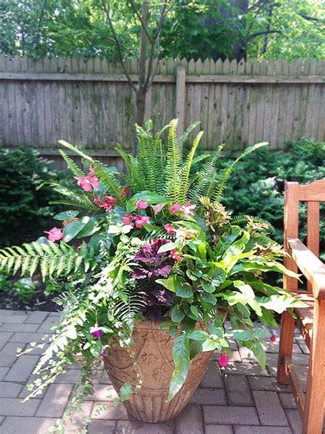 shade annuals for containers if i had my choice shade