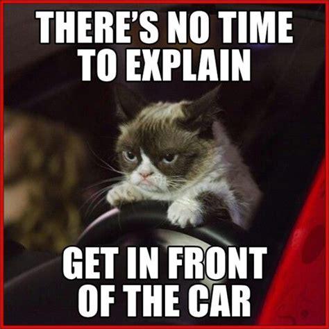 No Meme Grumpy Cat - 25 best ideas about no grumpy cat on pinterest grumpy