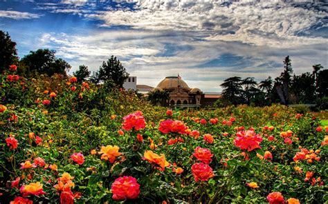 wallpaper flower garden rose rose garden wallpapers wallpaper cave