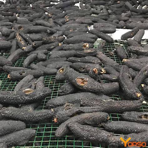 buy wild sea cucumber holothuria mamata dried  frozen