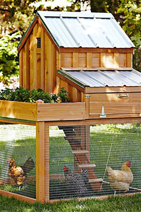 backyard chicken farmer sntila 6 8 chicken coop plans