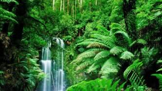 Jungle Landscape Pictures Green Landscapes Trees Jungle Forest Rainforest Wallpaper