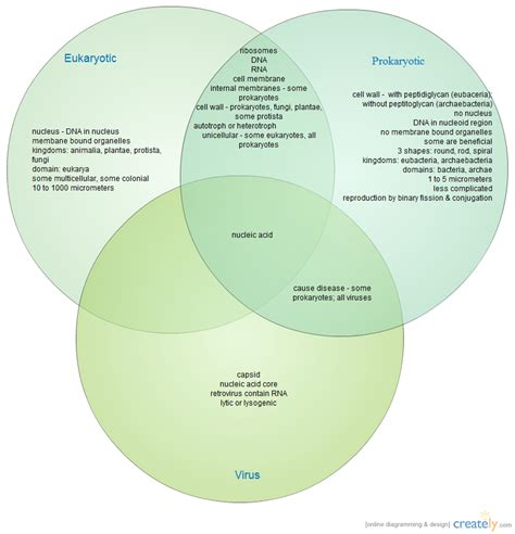 venn diagram of virus and bacteria protists viruses and bacteria venn diagram wiring