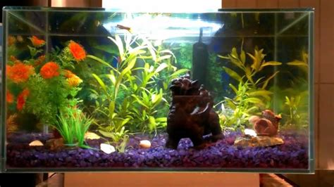 Spongebob Bedroom Ideas fluval edge freshwater tropical community fish tank