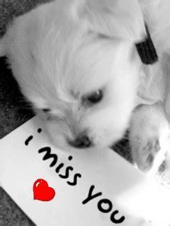 descargar gratis imagenes de i miss you fondos animados tiernos de amor