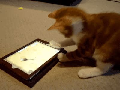 ridiculously funny cat   remind