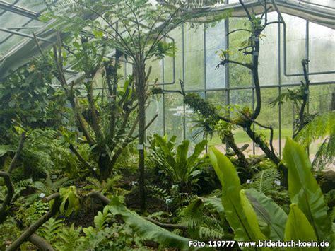 botanischer garten nrw bilderbuch k 246 ln botanischer garten flora tropenhaus