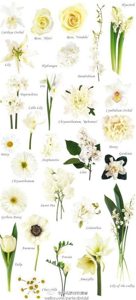 types of white flowers for wedding 17 best images about flower types on