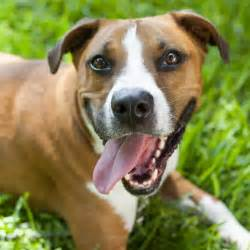 Pets Alive Dogs Pets Alive Available Dogs Pets Alive