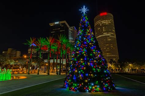 flordia xmas trees colors in ta matthew paulson photography