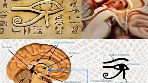 Detox Mercury From Your Brain by How To Detox Your Pineal Gland Fluoride Mercury Your