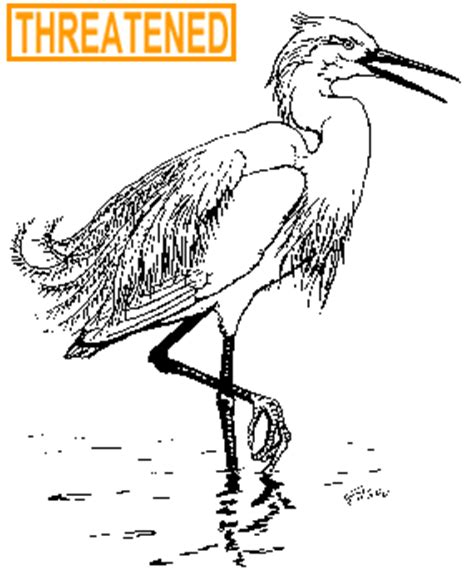 ct boating license age deep snowy egret fact sheet
