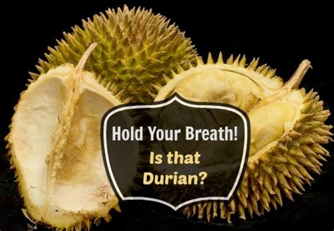 does concolor fir smell like oranges what does a durian fruit smell like how things smell