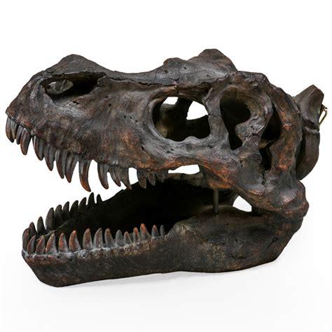 tyrannosaurus dinosaur skull wall head home accessories