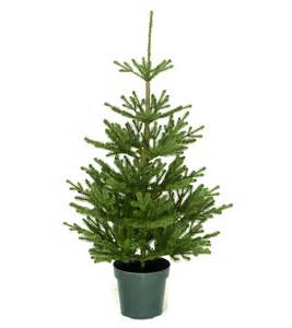 4ft imperial spruce potted feel real artificial christmas