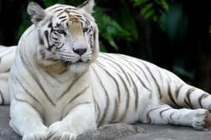 Gajah Putih 37 by Haiwan Terancam Yang Berwarna Putih Permata Dunia