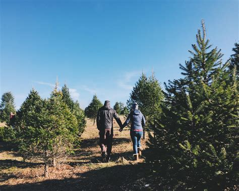 100 newbury christmas tree farm the 5 best dog