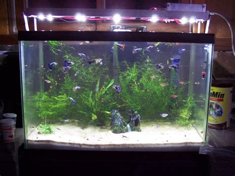 led light planted aquarium iron blog
