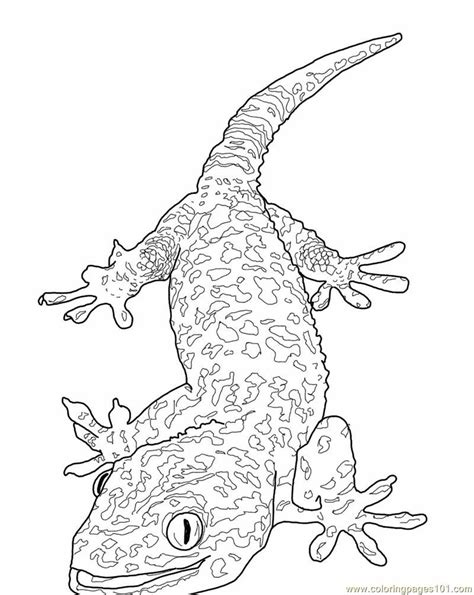 christmas lizard coloring pages coloring pages of a lizard coloring home
