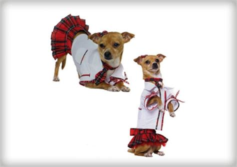 where can you buy a puppy you can buy costumes for dogs page 13 askmen