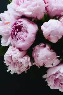 pink peonies pink peonies dreaming of spring pinterest beautiful romantic and flower
